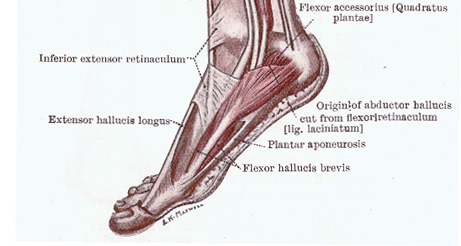Arch Pain in the Foot